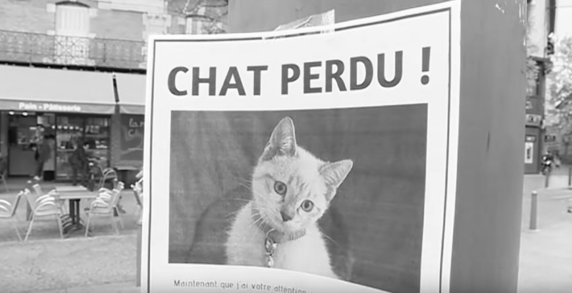 Man Uses Cute Missing Kitten Poster To Find Job