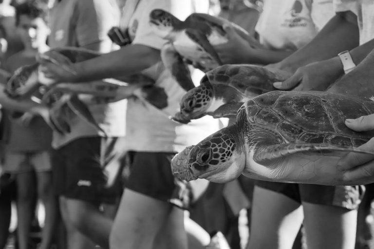 Six Endangered Turtles Caught In Nets Released Into Sea