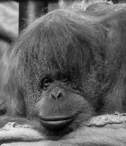 Credit: CEN/Gdansk Zoo
