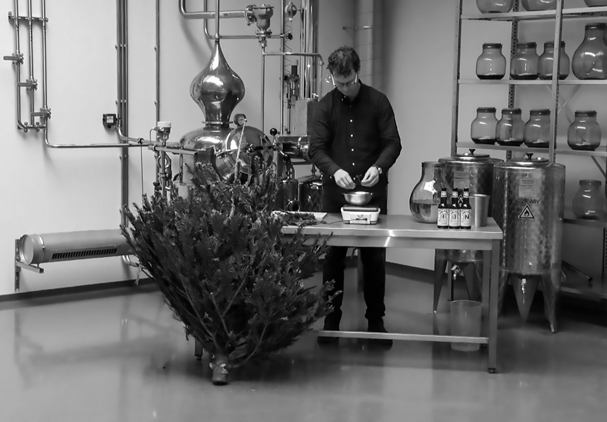 Dutch Brewer Collects Old Xmas Trees To Make Beer
