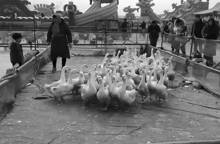 Geese Tortured For Fun At Chinese New Year Fair