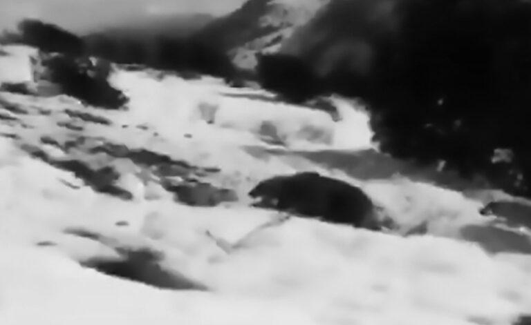 Shephards Stone Mother Bear Who Abandons Triplets