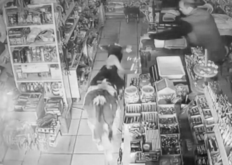 Moment Young Calf Wanders Into Grocery Store