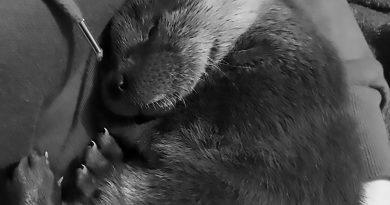 Credit: CEN/Tierrettung Oberoesterreich