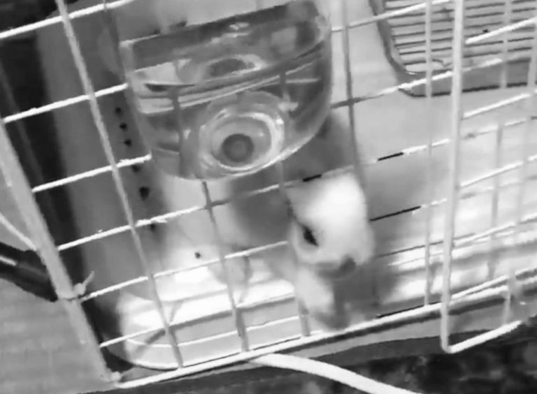 Houdini Baby Rabbit Launches Miracle Escape From Cage