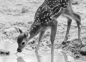 Credit: CEN/Tiergarten Schoenbrunn-Daniel Zupanc