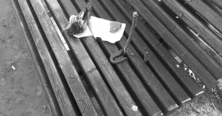 Park Bench Snake Shocks Couple Who Ignored Sign