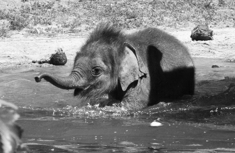 Baby Elephant Enjoys First Warm Day Of Summer In Pool