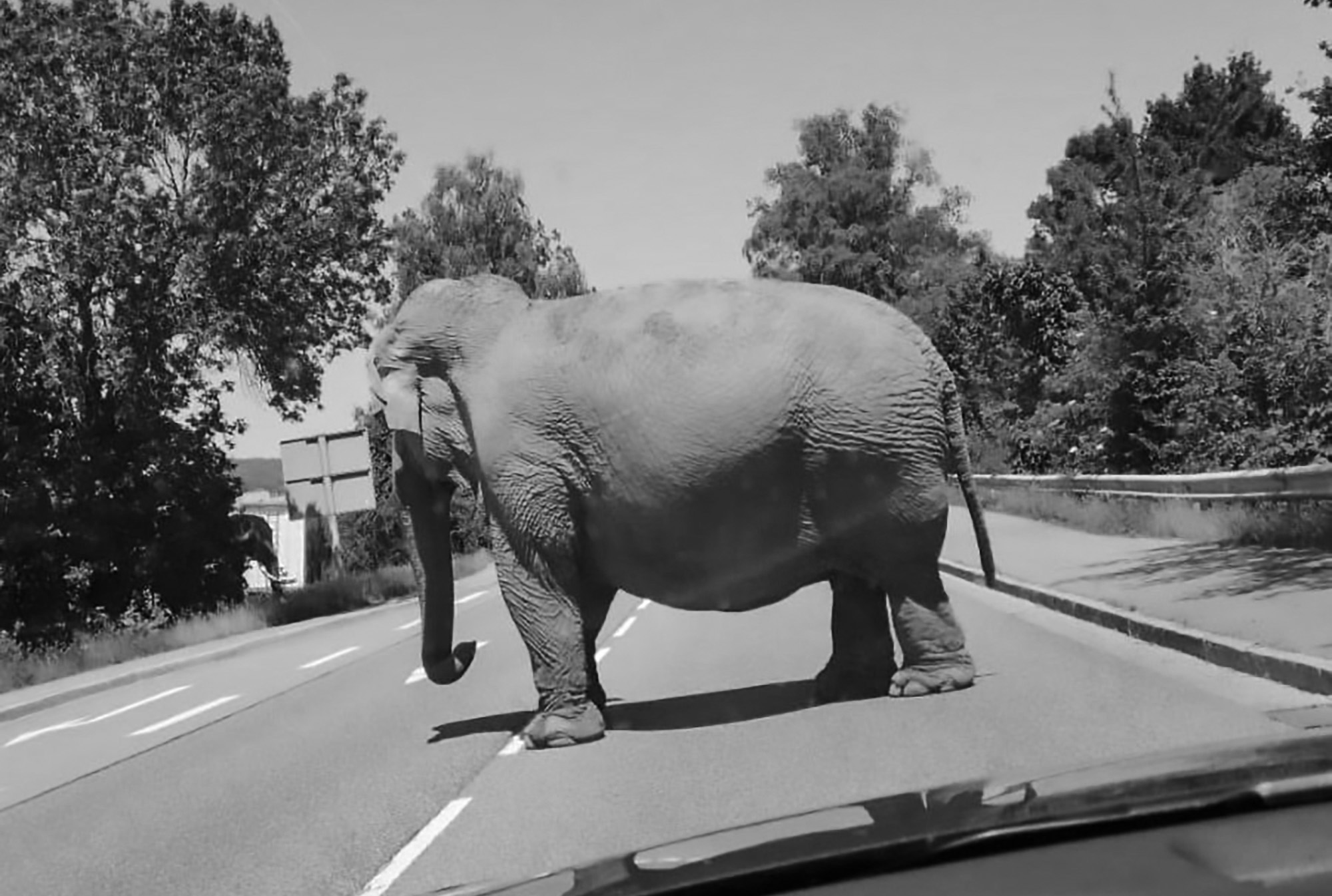 Germanys Oldest Circus Elephant Escapes On Busy Road