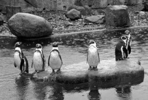 Credit: CEN/Zoo Dresden