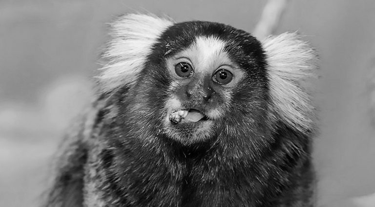 Kidnapped Tiny Monkey Found After Facebook Hunt
