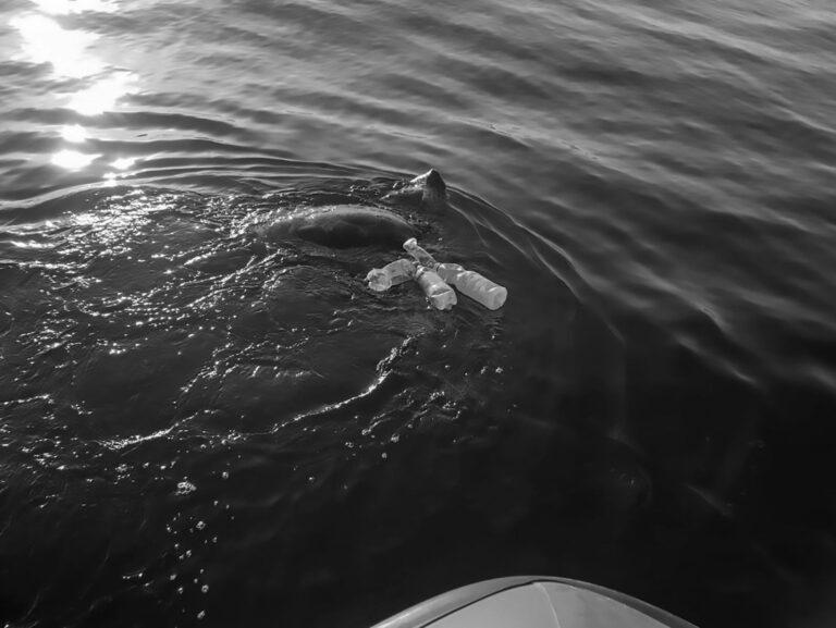 Sea Turtle Freed From Fishing Net Off Spanish Coast
