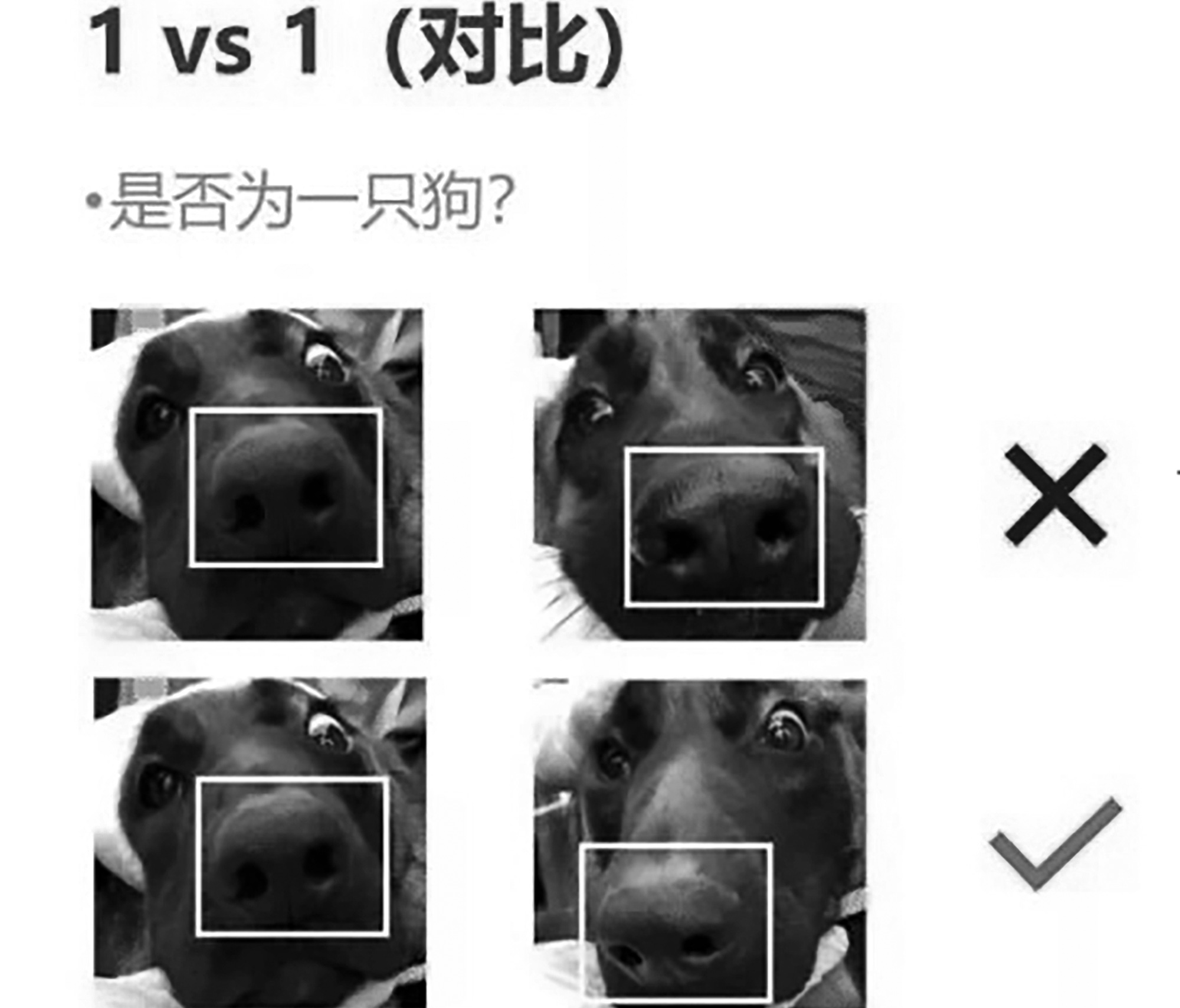 Forget Face Recognition: App Ids Pooches By Their Noses
