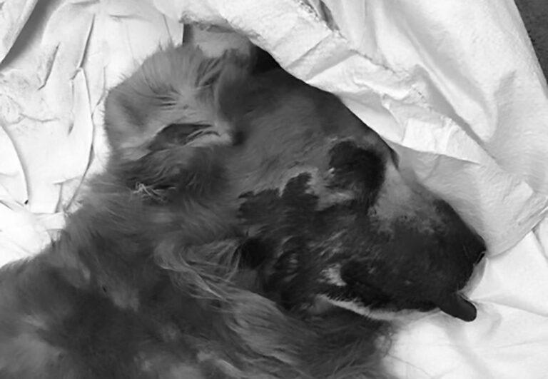 Man Kills OAPs Retriever As Revenge For Poodle Death