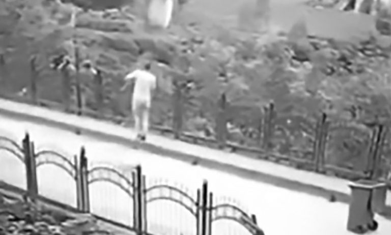 Street Cleaner Sweeps Up Puppy And Drops It Over Bridge