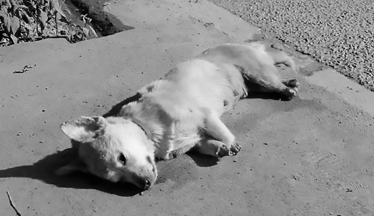Dog With 4 Paws Cut Off Left To Die In Burning Sun