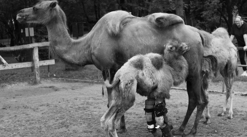 Credit: CEN/ Tier - und Freizeitpark Thüle