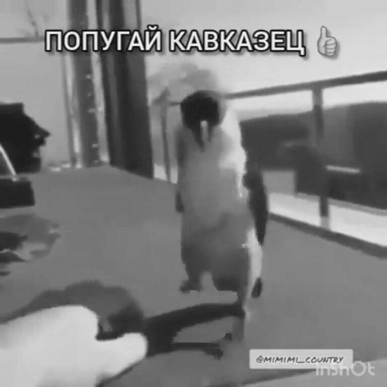 Dancing Parrot Performing Russian Dance Is Online Hit