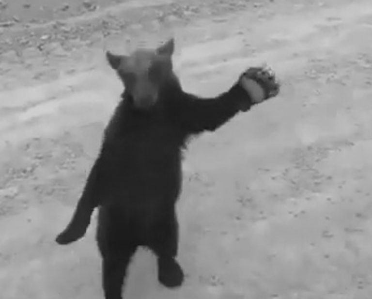 Kung-Fu Bear Shows Off Moves Before Being Scared Off