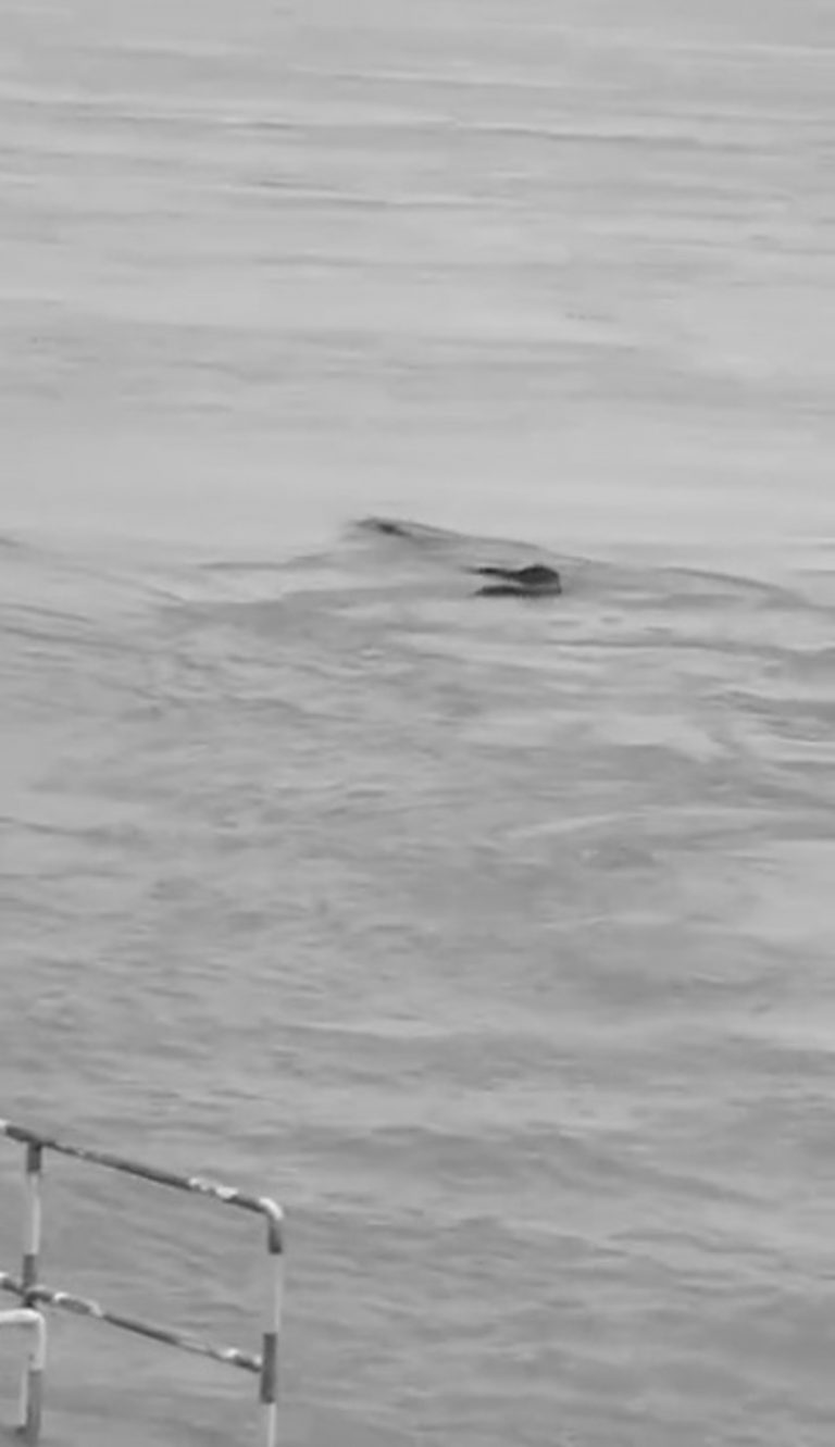 Viral: China Loch Ness Monster Spotted In River Yangtze