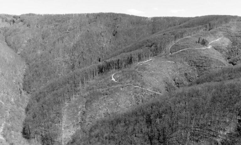 Romanians Ask EU To Intervene To Stop Forest Destruction