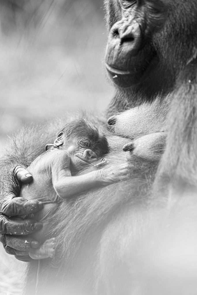 CEN/ Zoo Basel