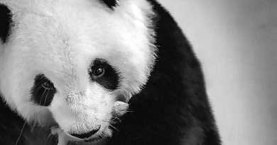 Credit: CEN/ Zoo Berlin