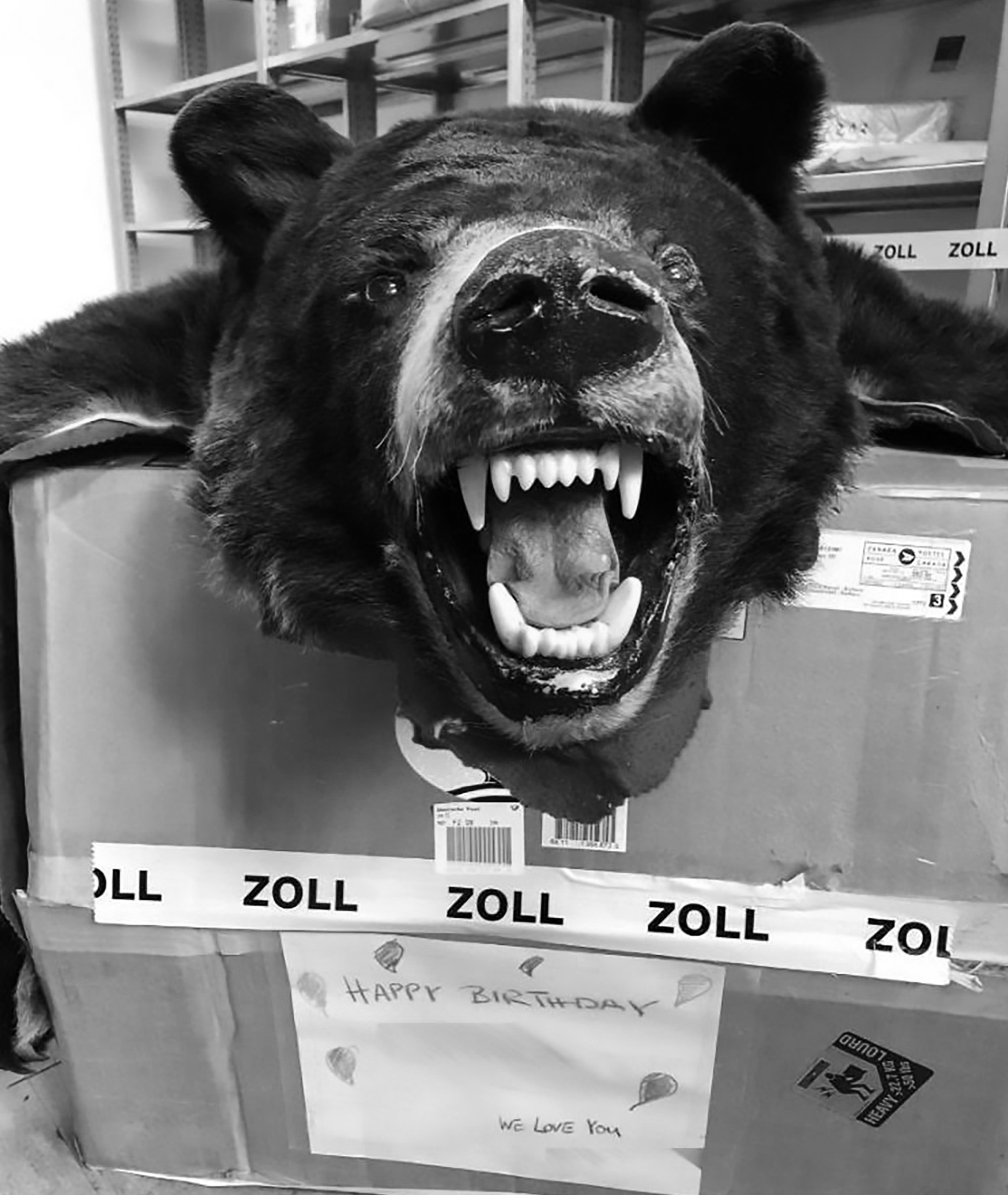 Bear Head Sent To Bday Kid In Box Labelled Teddy Bear