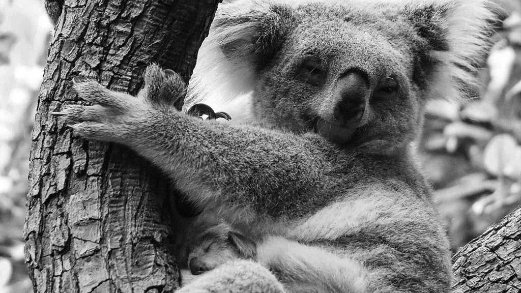 Credit: CEN/ Zoo Duisburg L Sickmann