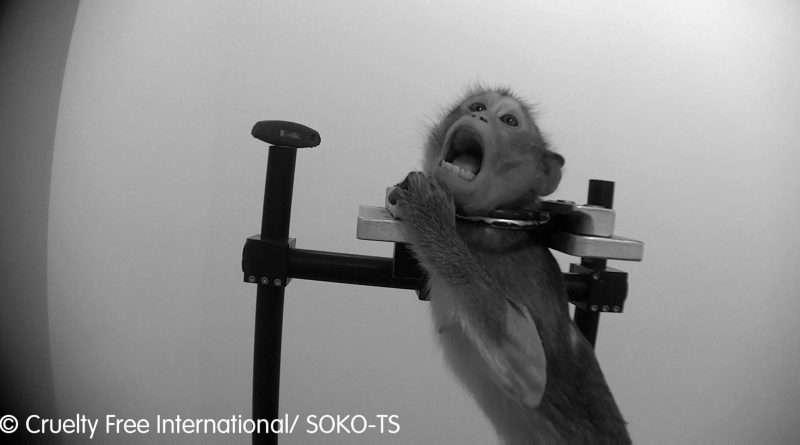 Credit: CEN/Cruelty Free International and SOKO Tierschutz