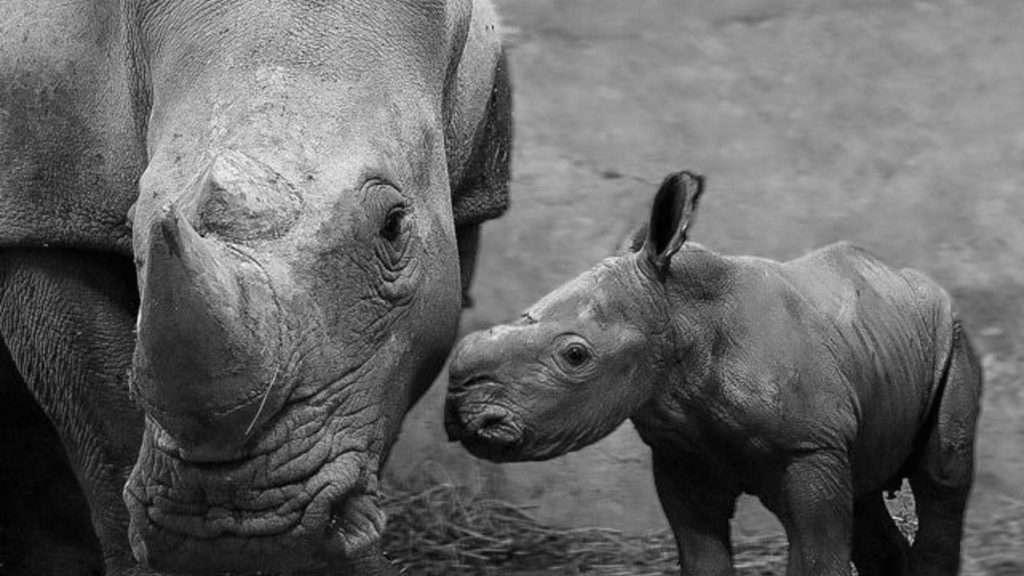 Credit: CEN/ Zoo Schmiding / Selina Hauzenberger