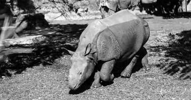 Credit: CEN/ Zoo Basel