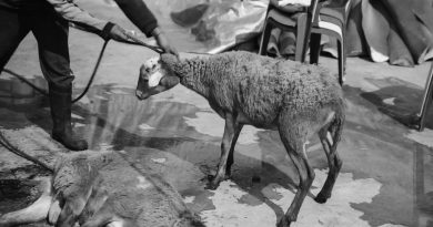 Credit: CEN/Igualdad Animal
