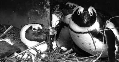 Credit: CEN/ Zoo Magdeburg