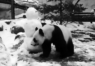 Credit: CEN/@moscow_zoo_official