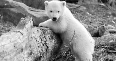 Credit: CEN/Zoo Vienna