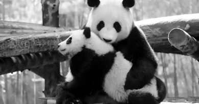 Credit: AsiaWire / Shanghai Wild Animal Park