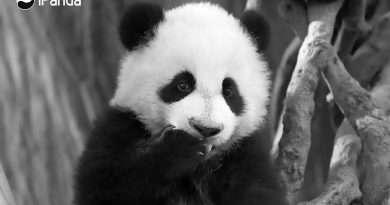 Credit: AsiaWire / Chengdu Panda Base