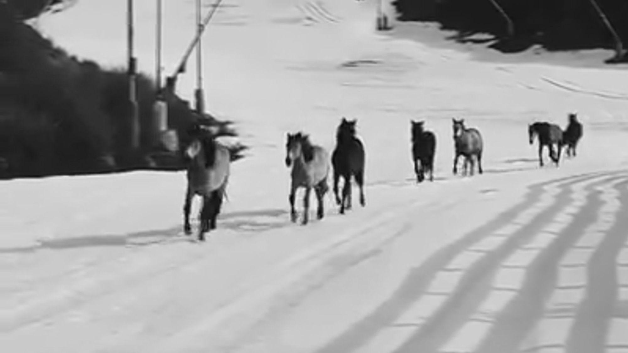 Wild Horses Run Around Pistes At Empty Ski Resort Ananova