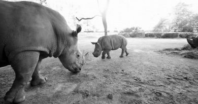 Credit: Newsflash/Zoo Dortmund