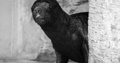 Credit: Newsflash/Zoo Vienna