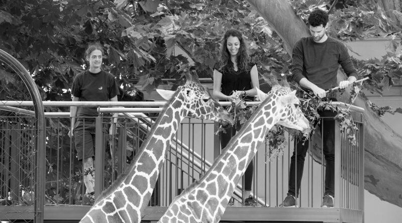 Credit: Schonbrunn Zoo/Newsflash
