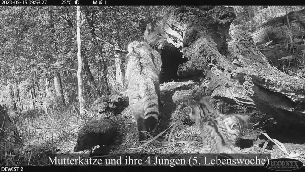 German Wildlife Foundation, Malte Gotz/Newsflash