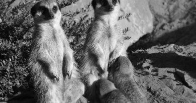 Credit: Safaripark Beekse Bergen/Newsflash