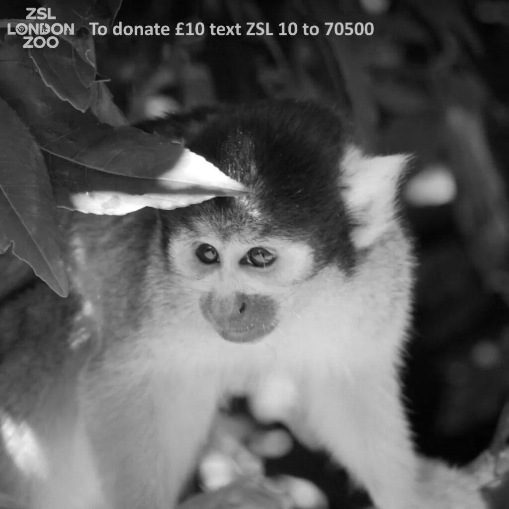 Credit: ZSL London Zoo/Real Press