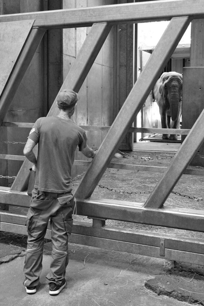Credit: 2020 Zoo Halle/Newsflash