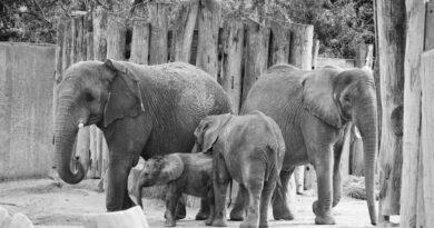 Credit: Zoo Halle/Newsflash