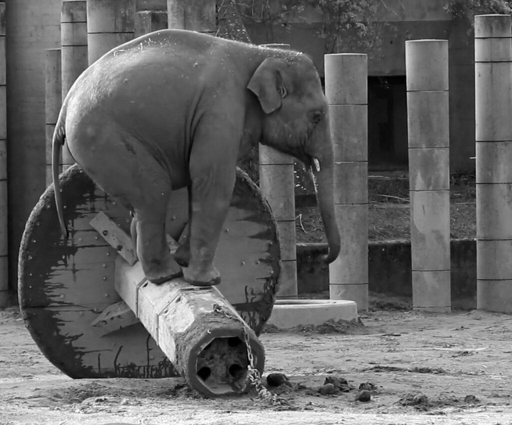 Credit: ZoologiskHave/Newsflash