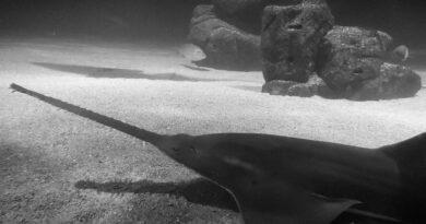 Credit: Oceanografic Valencia/Real Press