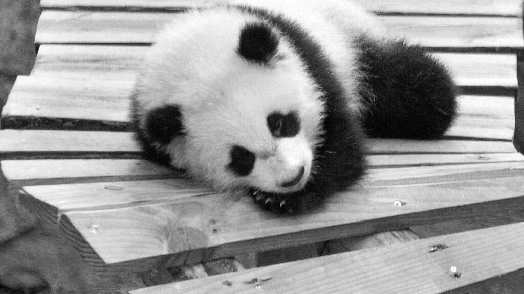 Credit: Ouwehands Zoo/Newsflash